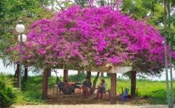 nhung loai hoa khoe sac trong nang ha o hue