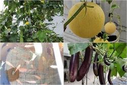 Ông bố đảm trồng cả vườn rau, nuôi đủ loại cá trên sân thượng ở Biên Hòa