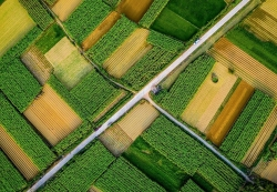 Thăm làng Hà Cảng đẹp mộng mơ xứ Huế, ngắm cây cô đơn