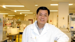Giáo sư gốc Việt đầu tiên được công nhận là viện sĩ Viện Hàn Lâm Australia
