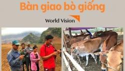 Tổ chức World Vision Vietnam trao 30 con bò giống cho người dân Điện Biên