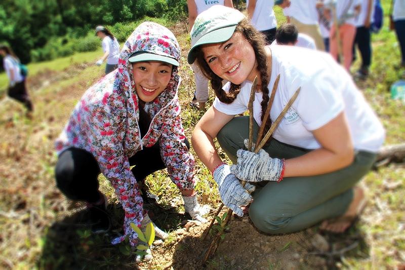 peacetrees vietnam uom nhung mam cay hoa binh tren dat quang tri