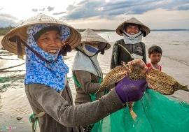 Nghề kéo lưới rùng bắt cá độc đáo ở xứ Quảng