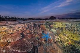 Sắc màu đại dương Việt Nam