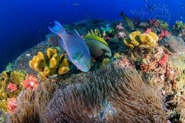 Hòn đảo hình thành từ phân cá vẹt