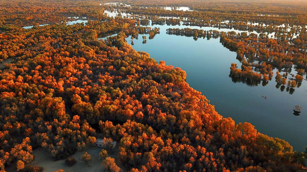 Đẹp nao lòng rừng cây lá đỏ ở Tân Cương