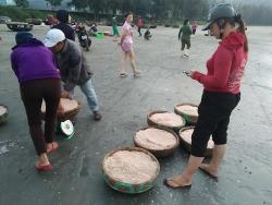 Nhiều ngư dân Quảng Ngãi trúng đậm ruốc biển cuối năm