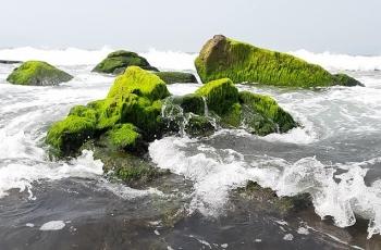 Đẹp ngỡ ngàng mùa rêu đá cuối đông