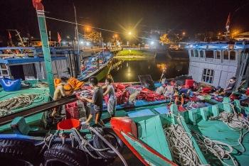 Mưu sinh ở cảng cá lớn nhất miền Trung ngày cuối năm
