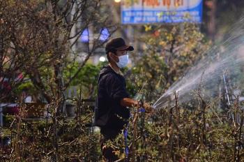 Hoa cảnh Tết ở Đà Nẵng vắng người mua