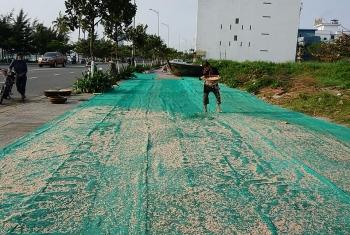 Vào mùa ruốc biển, ngư dân Đà Nẵng phấn khởi vì giá cao