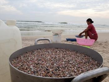 Tất bật mùa ốc gạo ở xứ Quảng, thu tiền triệu mỗi ngày