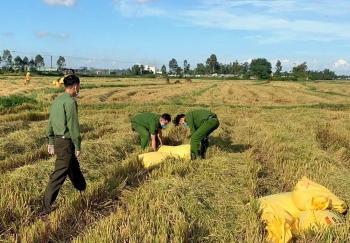 Công an Đà Nẵng giúp dân thu hoạch lúa
