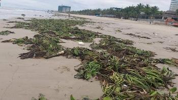 Bãi biển Đà Nẵng ngập rác sau bão, cộng đồng kêu gọi chung tay vớt rác cho biển xanh