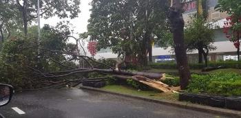 Bão số 9 áp sát Quảng Nam - Quảng Ngãi, bắt đầu gây nhiều thiệt hại