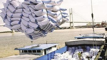 Giá gạo của Việt Nam giảm mạnh do ảnh hưởng dịch Covid-19