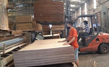 Hoa Kỳ gia hạn kết luận điều tra chống bán phá giá gỗ dán từ Việt Nam