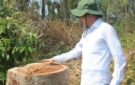 Tin tức trong ngày mới nhất, nóng nhất hôm nay 11/7: Buộc cán bộ phá rừng trồng lại rừng
