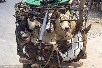Thông tin pháp luật chiều 14/9: Cụ ông chết bất thường trong lúc mua chó dạo ở nhà người phụ nữ