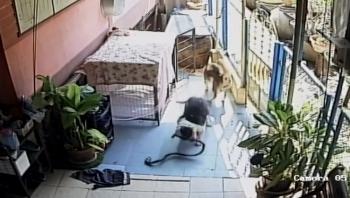 Rắn kịch độc đột nhập vào nhà, chú chó dũng cảm lao ra tấn công đến quên cả mạng sống để bảo vệ cụ bà