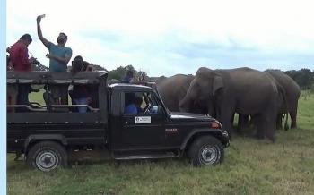 Video: Đàn voi hoang dã cố gắng lao vào đoàn du khách để chen chân chụp ảnh