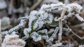 Băng tuyết phủ trắng đỉnh Phja Oắc Cao Bằng