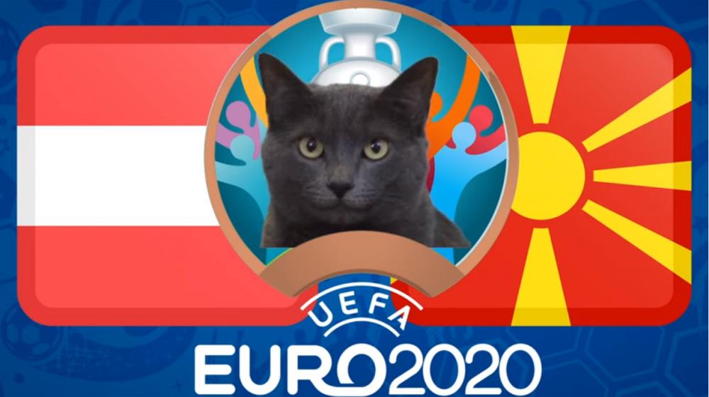 Mèo tiên tri dự đoán Áo vs Bắc Macedonia - EURO 2021: Mèo không thích Áo