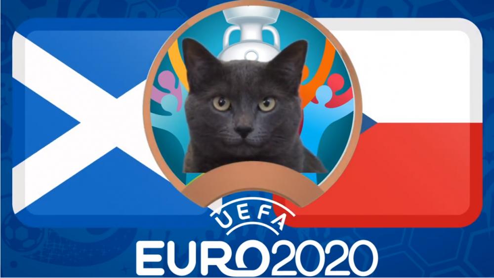 Mèo tiên tri dự đoán Scotland vs CH Séc - EURO 2021: Mèo Cass lựa chọn bất ngờ