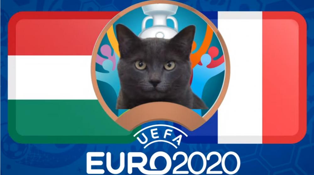 Mèo tiên tri dự đoán Hungary vs Pháp - EURO 2021: Mèo Cass yêu thích 'Gà trống'