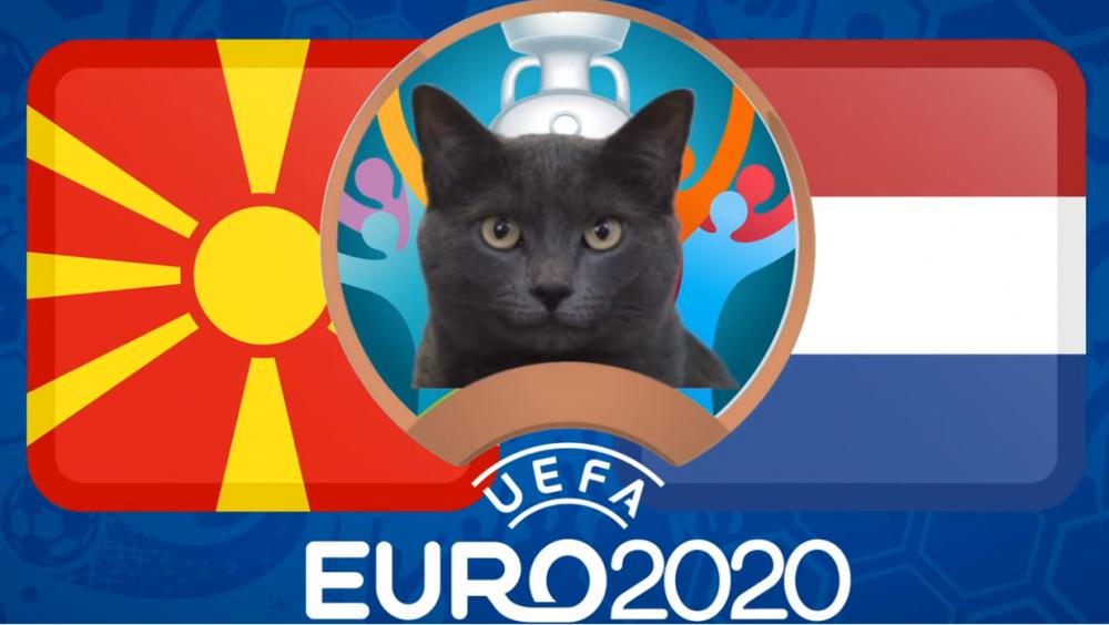 Mèo tiên tri dự đoán Bắc Macedonia vs Hà Lan - EURO 2021: Mèo Cass lựa chọn đội khách