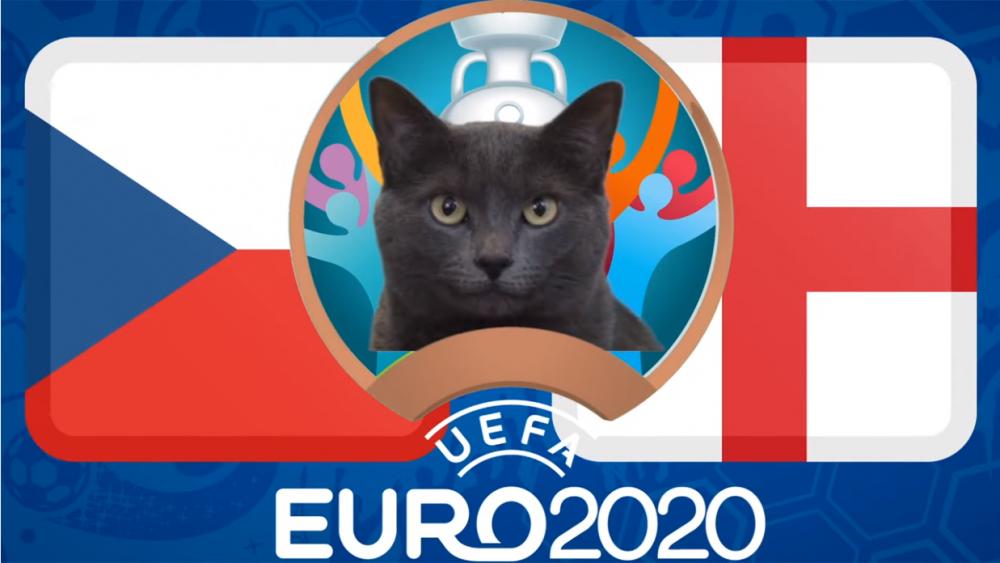 Mèo tiên tri dự đoán CH Séc vs Anh - EURO 2021: Mèo Cass chọn 'Tam sư'