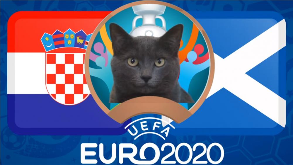 Mèo tiên tri dự đoán Croatia vs Scotland - EURO 2021: Mèo Cass thích Scotland