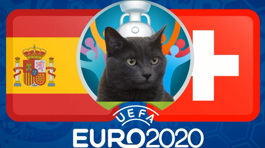 Mèo tiên tri dự đoán Thuỵ Sĩ vs Tây Ban Nha (23h00, 2/7) - vòng tứ kết EURO 2021