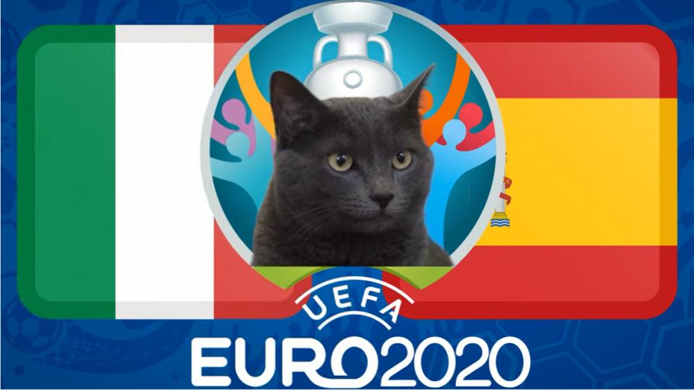 Mèo tiên tri dự đoán Italia và Tây Ban Nha, 02h00 ngày 7/7 - vòng bán kết EURO 2021
