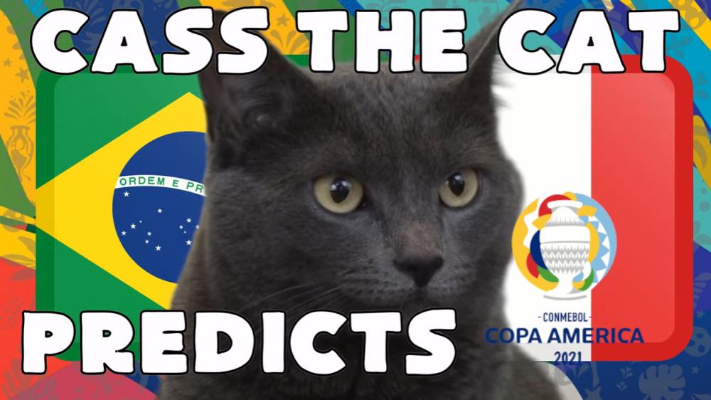 Mèo tiên tri dự đoán Brazil vs Peru, 06h00 ngày 06/07 - vòng bán kết Copa America 2021