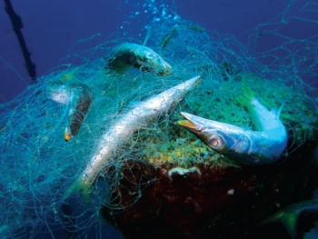 """""""Lưới ma"""", sát thủ của hệ sinh thái biển"""