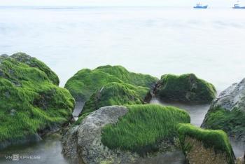Ngỡ ngàng vẻ đẹp của mùa rêu ở đảo Lý Sơn