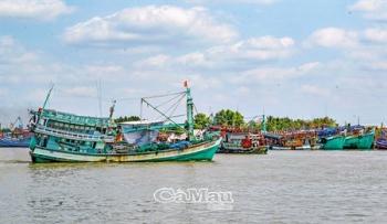 Ngư dân cửa biển Sông Đốc trúng mùa cá cơm sau Tết