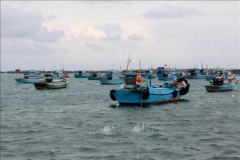 Bình Thuận: Không cho xuất bến đối với tàu cá chưa lắp thiết bị giám sát