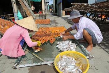 Ngư dân Gò Công Đông được mùa khai thác biển
