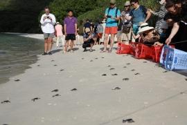 Rộn ràng mùa rùa sinh nở ở Côn Đảo