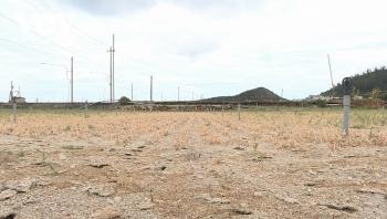 """Hàng trăm héc ta đất nông nghiệp ở """"thủ phủ"""" hành, tỏi Lý Sơn bị bỏ hoang"""