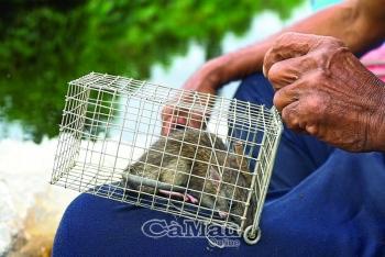 Cà Mau: Săn chuột rừng, nghề làm chơi ăn thật