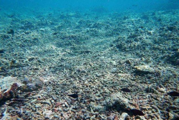San hô Biển Đông bị tàn phá vì Trung Quốc bồi đắp đảo
