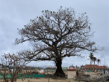 """Xác xơ """"thiên đường"""" du lịch đảo Lý Sơn"""