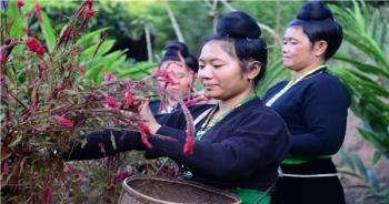 Điện Biên: Xuân sớm ở bản người Cống