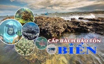Cấp bách bảo tồn biển Việt Nam