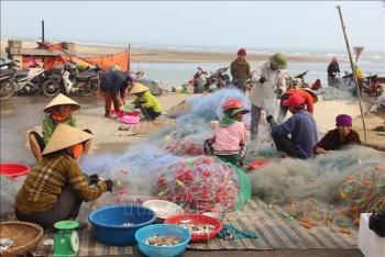 Ngư dân Hà Tĩnh trúng mùa cá cháo đặc sản