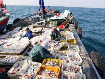 Quyết liệt, mạnh mẽ hơn để gỡ 'thẻ vàng' về khai thác hải sản