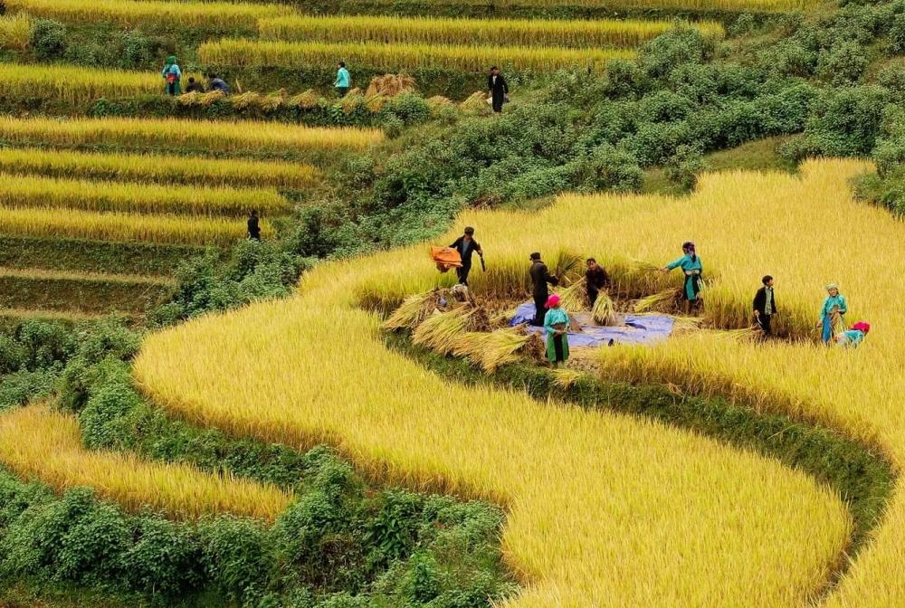 Việt Nam nỗ lực giảm nghèo bền vững